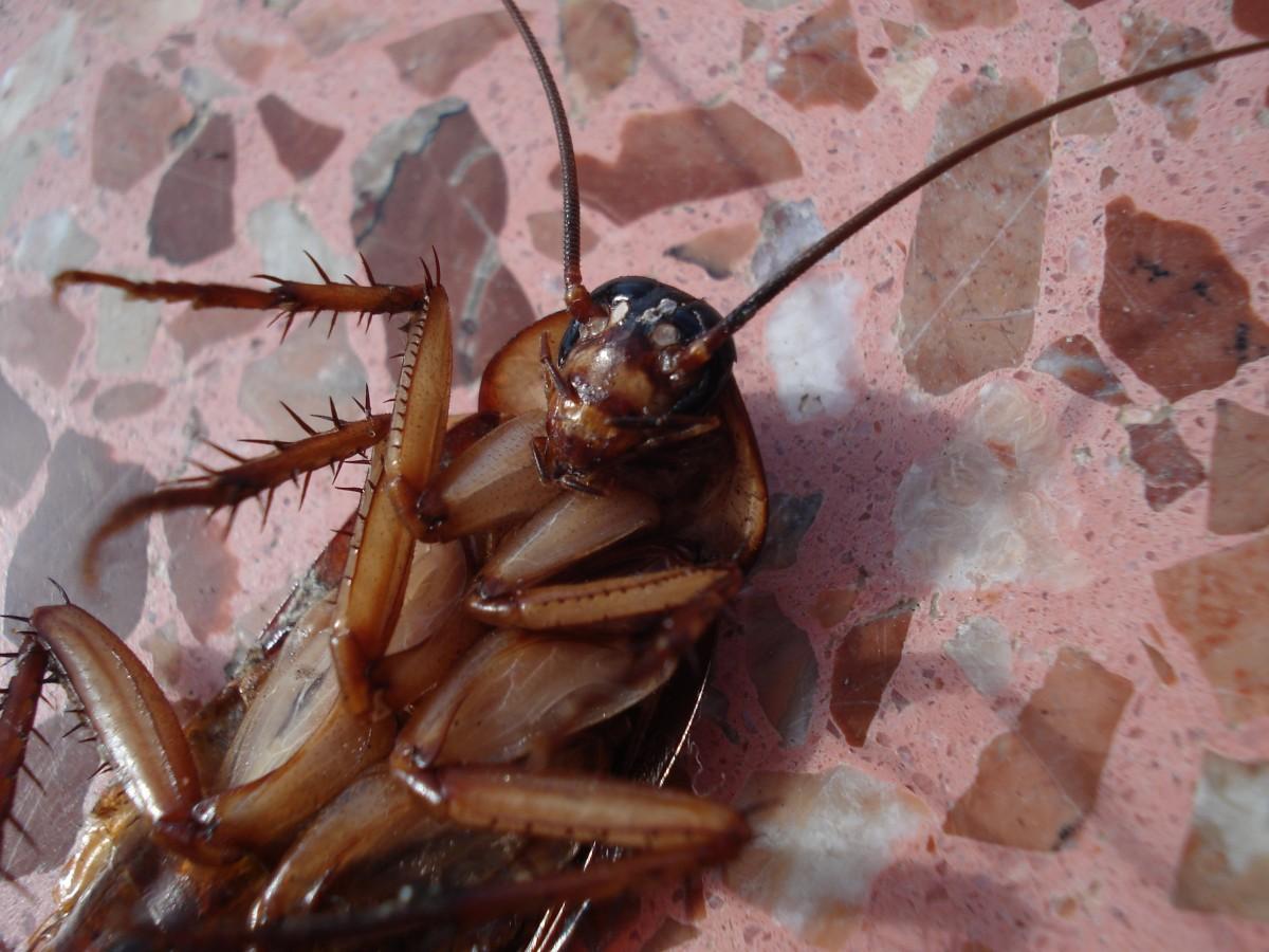 Spôsoby, ako do domácnosti nikdy nepreniknúť žiadny hmyz