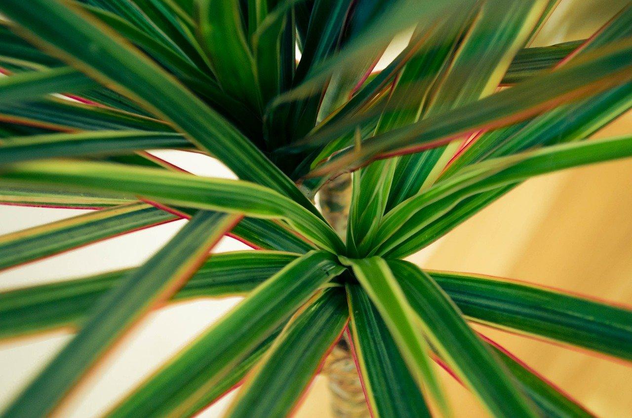 Izbové rastliny, ktoré ozdobia váš domov a navodia všetky dobré vibrácie